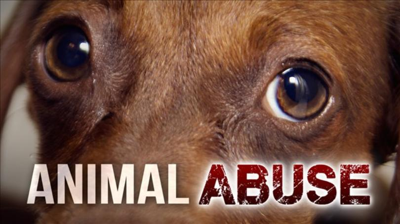 animal abuse registry