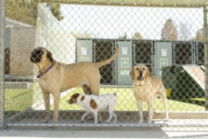 Illinois to Require Fire Protection for Kennels